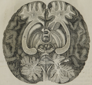 "underside dissection of brain interior from ""The motive power of the human system: with the duodynamic symptoms and treatment of chronic diseases"" HH Sherwood. New York : Wiley and Putnam, 1847"
