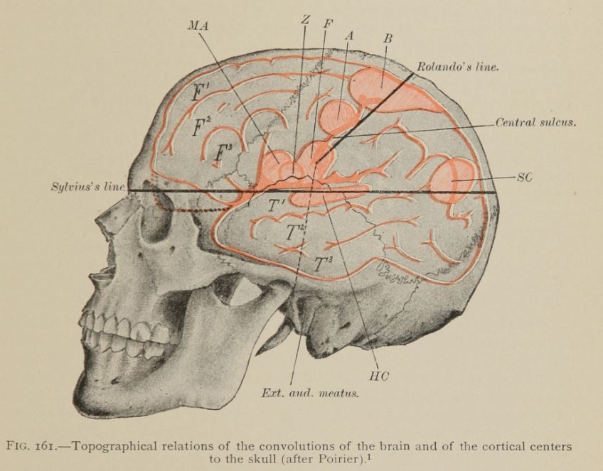 Skull and brain diagram from O. Vierordt  1898 A clinical text-book of medical diagnosis for physicians and students: based on the most recent methods of examination